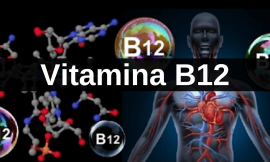 ALIMENTOS RICOS EM VITAMINA B12 (COBALAMINA)